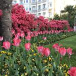 Gorgeous flowers in Stresa.