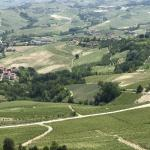 The beautiful vineyards of the Langhe Hills.